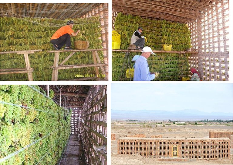 Grape Drying: Current Status and Future Trends | IntechOpen