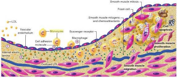 Novel Applications of Cardiovascular Magnetic Resonance