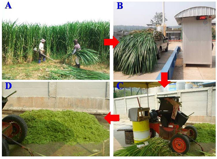 Grass Silage for Biogas Production | IntechOpen