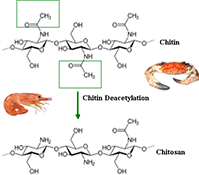 Chitosan from Marine Crustaceans: Production