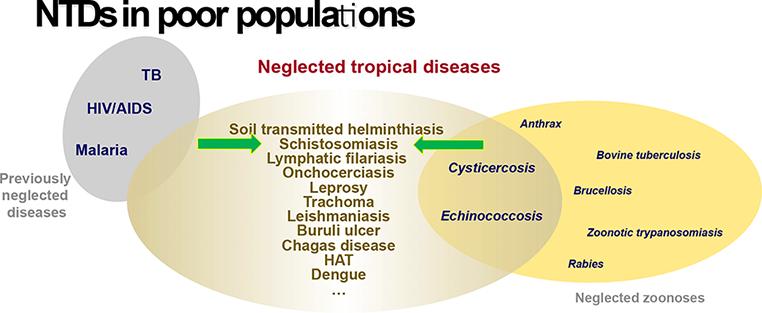 Transzmissziós helminthiasis, Az opisthorchiasis akciópirantelje