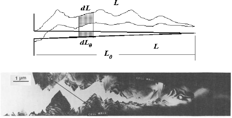 A Fractal Model Of The Stress Field Around A Rough Crack