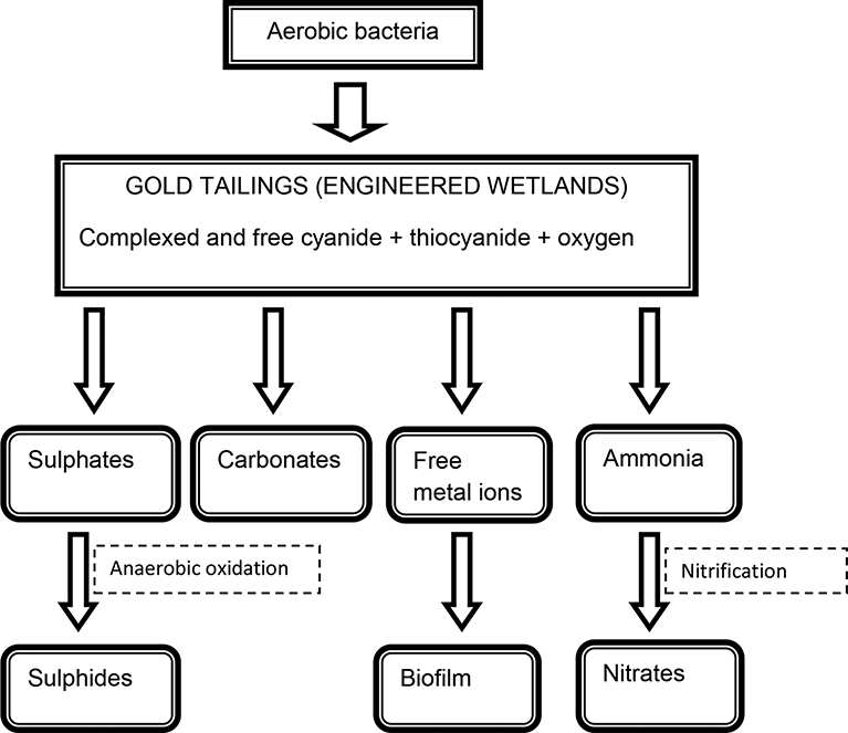 Review Of The Impact On Water Quality And Treatment Options Of Cyanide Used In Gold Ore Processing Intechopen