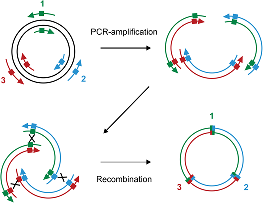 Site‐Directed Mutagenesis by Polymerase Chain Reaction