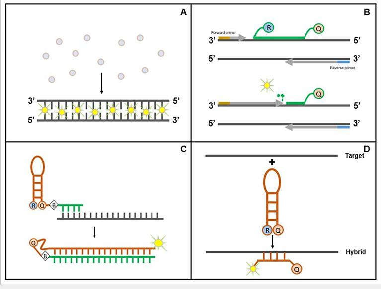 Guidelines For Successful Quantitative Gene Expression In Real Time Qpcr Assays Intechopen