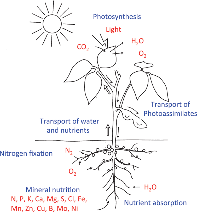 Role of Nitrogen on Growth and Seed Yield of Soybean and a