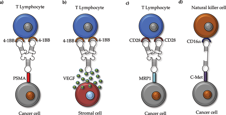 Aptamers as a Promising Therapeutic Tool for Cancer