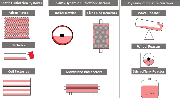 Concepts for the Production of Viruses and Viral Vectors in Cell
