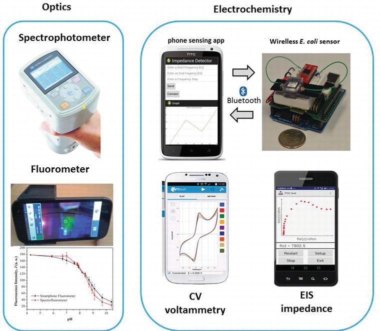 Biosensor Platforms for Rapid Detection of E  coli Bacteria