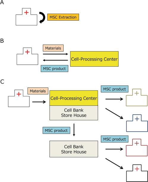 Transportation of Mesenchymal Stem Cells for Clinical