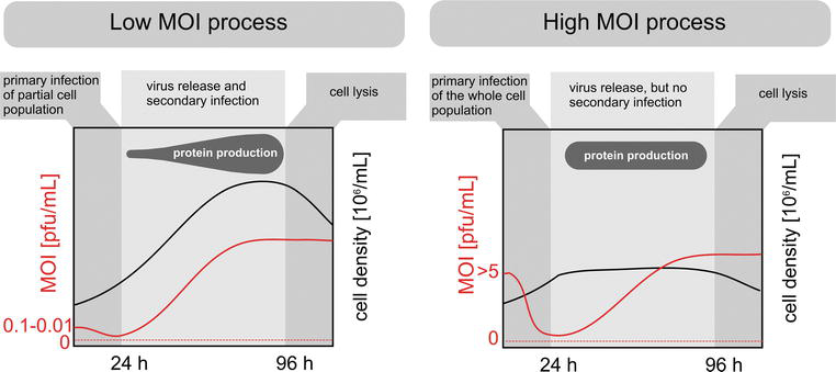 Process Optimization for Recombinant Protein Expression in