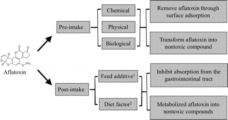 Natural Products for Preventing and Controlling Aflatoxin