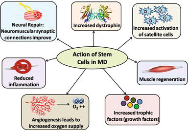 Stem Cell Therapy in Pediatric Neurological Disabilities