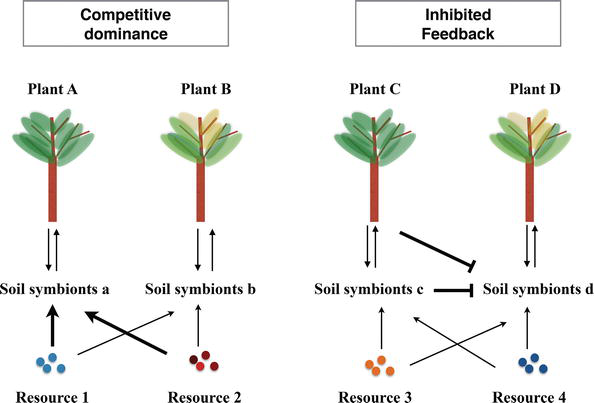 Plant-Microbe Ecology: Interactions of Plants and Symbiotic