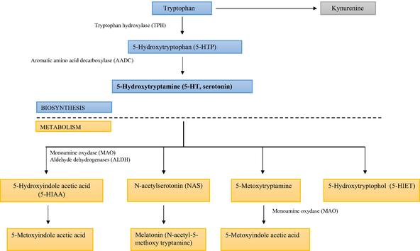 Serotonin in Neurological Diseases   IntechOpen