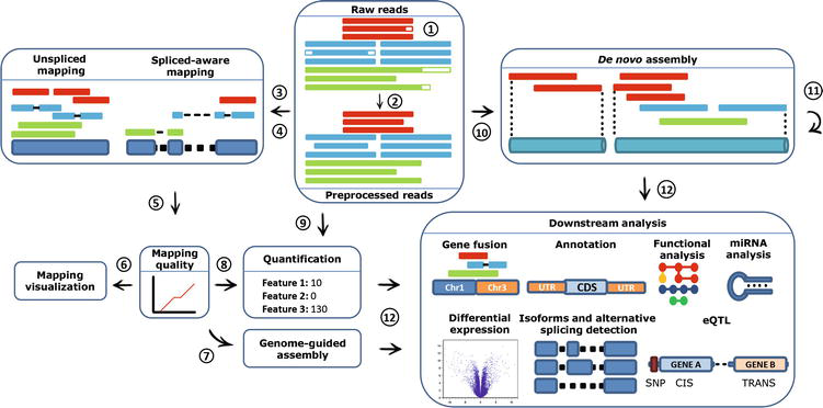 RNA‐seq: Applications and Best Practices | IntechOpen