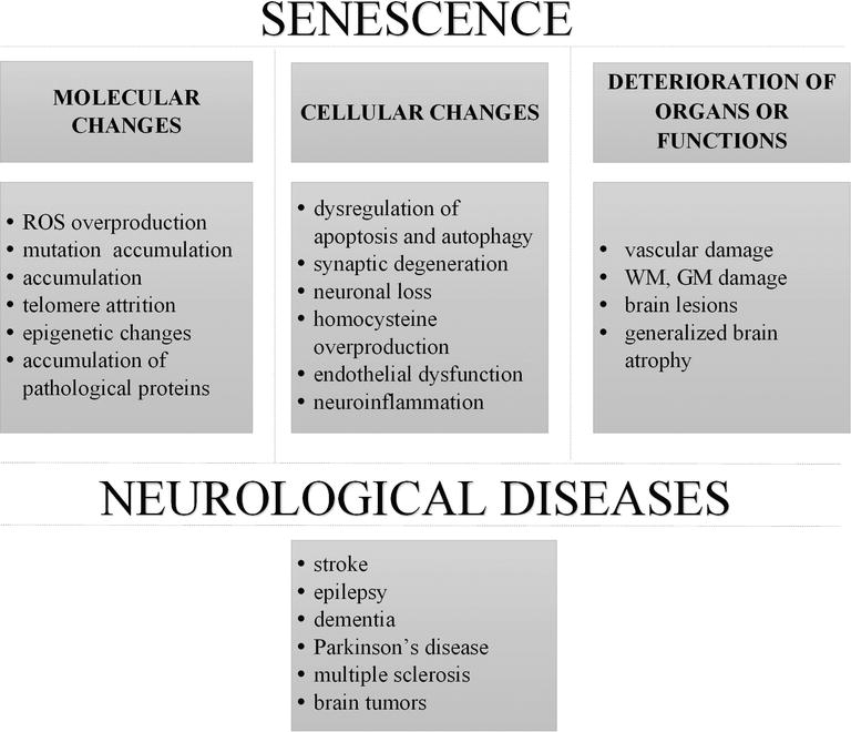 Aging and Neurological Diseases | IntechOpen