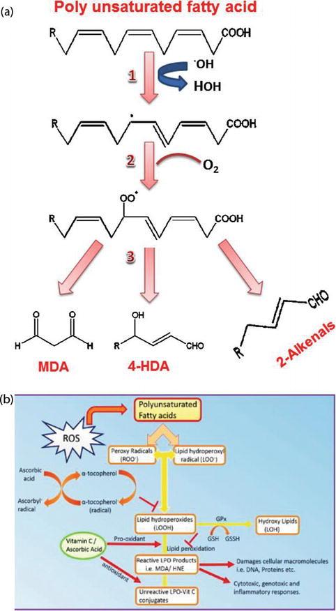 Vitamin C: An Antioxidant Agent | IntechOpen