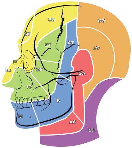 Anatomy Applied to Block Anesthesia for Maxillofacial