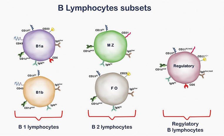 B Lymphocyte as a Target of Bacterial Infections | IntechOpen