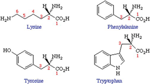 The Local Anesthetic and Pain Relief Activity of Alkaloids