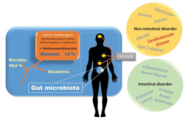 Archaebiotics: Archaea as Pharmabiotics for Treating Chronic