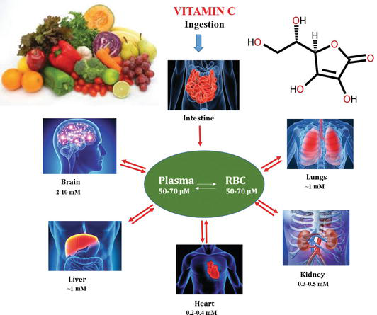 Vitamin C Sources Functions Sensing And Analysis Intechopen