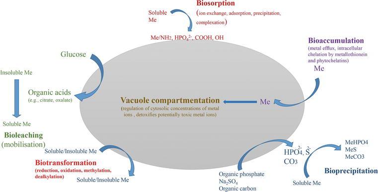 Yeast Biomass: An Alternative for Bioremediation of Heavy