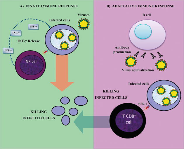 Immune System May Play Crucial Role In >> Physiology And Pathology Of Innate Immune Response Against Pathogens