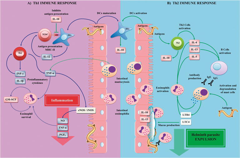 Physiology and Pathology of Innate Immune Response Against