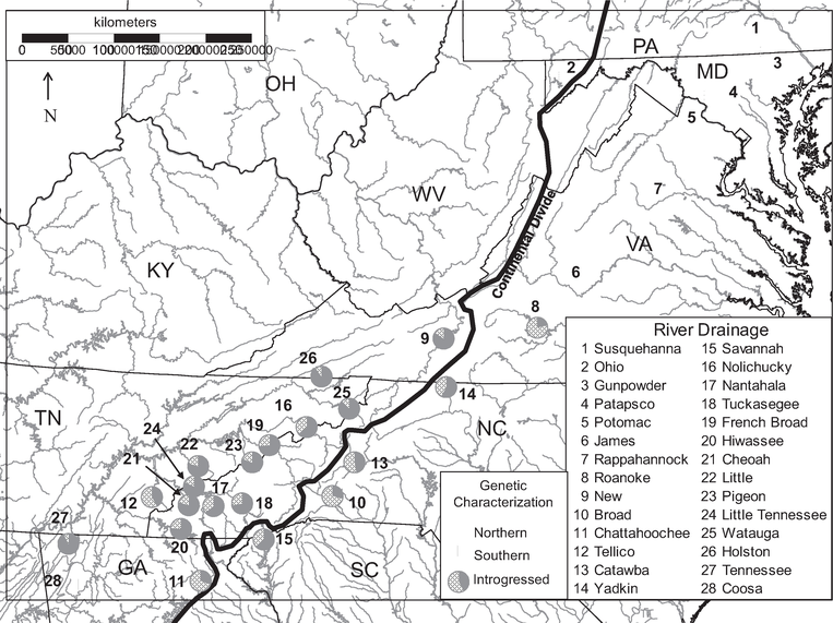 Genetic Characteristics of Southern and Northern Brook Trout