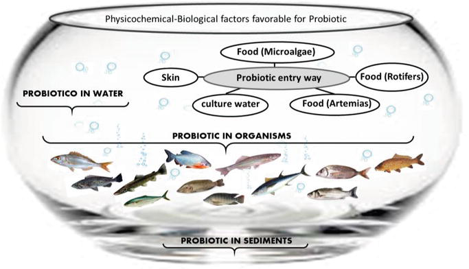 Probiotic Bacteria as an Healthy Alternative for Fish