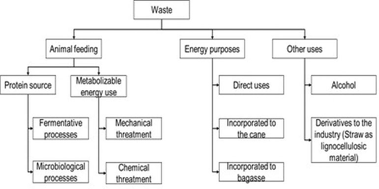 Competitive Management of Sugarcane Waste and Reduction of