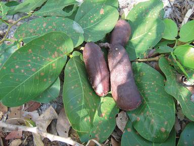 Plant-Based Ethnopharmacological Remedies for Hypertension in