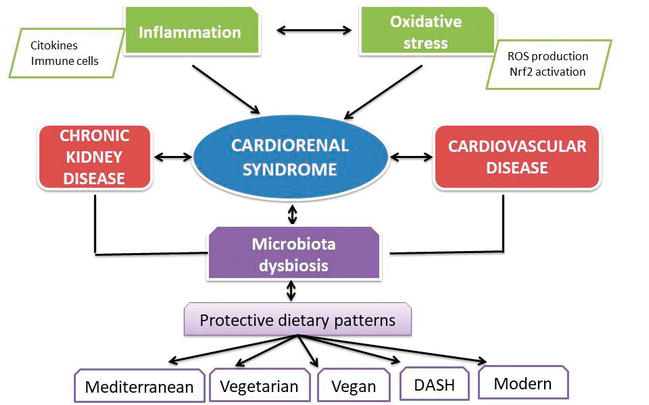 Inflammation And Chronic Kidney Disease Current Approaches And Recent Advances Intechopen