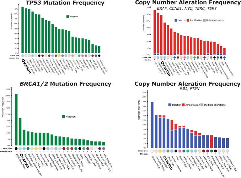 Ovarian Cancer Genetics Subtypes And Risk Factors Intechopen