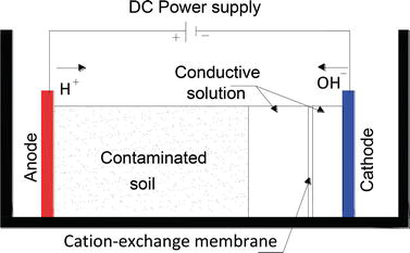 Enhancement of Bioremediation and Phytoremediation Using