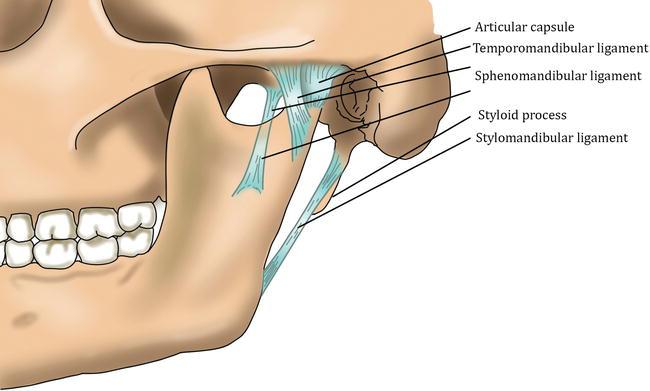 Surgical Approaches To The Temporomandibular Joint Intechopen