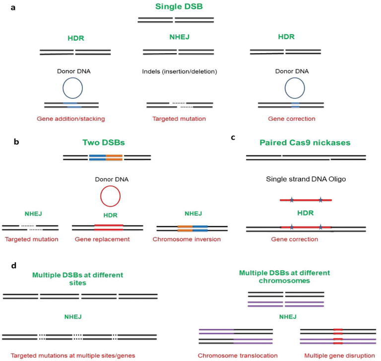 Targeted Genome Editing for Cotton Improvement   IntechOpen