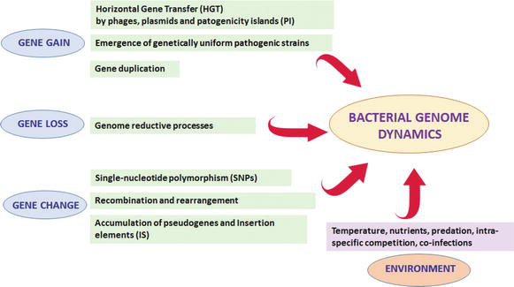 Genetic Approaches to Microbial Pathogenicity