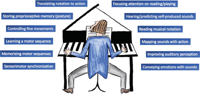 Music and Brain Plasticity: How Sounds Trigger Neurogenerative