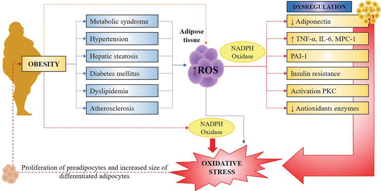 Adipose Tissue And Inflammation Intechopen