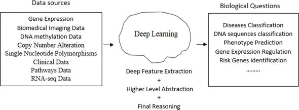 Deep Learning Models for Predicting Phenotypic Traits and