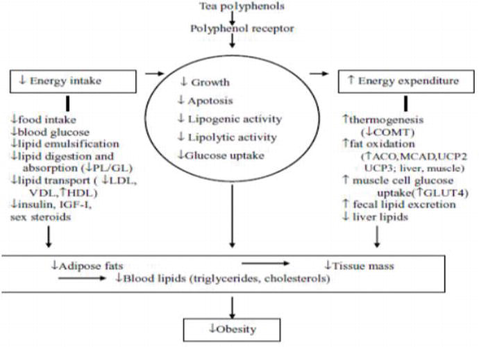 Oxidative Stress Diminishing Perspectives of Green and Black Tea