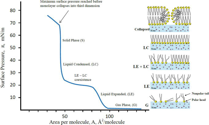 Monolayers of Carbohydrate-Containing Lipids at the Water