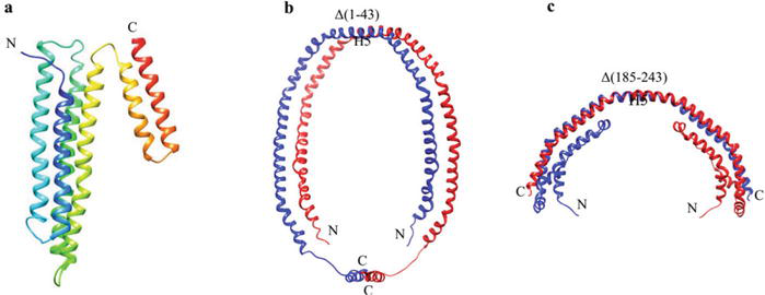 Structural Basis and Functional Mechanism of Lipoprotein in