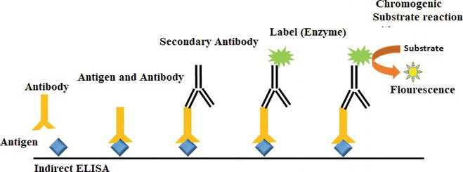 Protein-Based Detection Methods for Genetically Modified