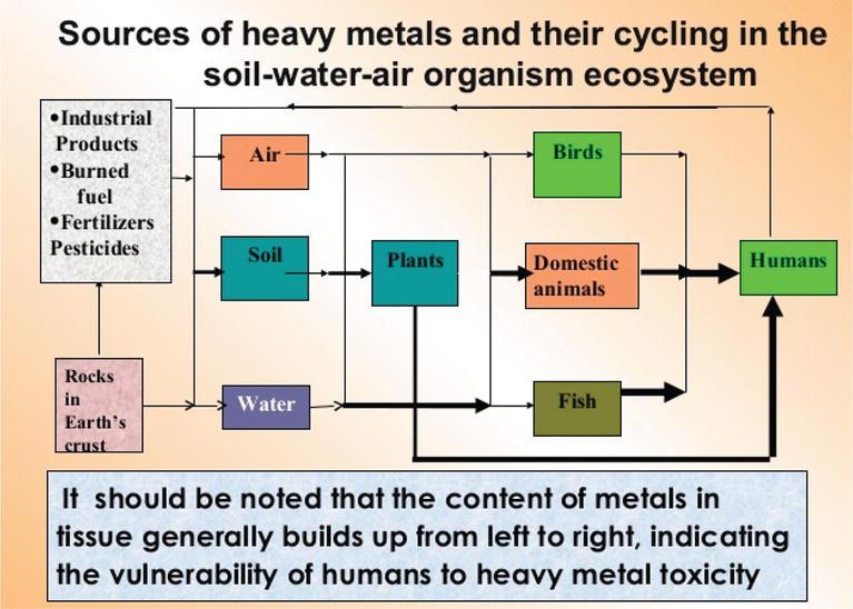 Environmental Contamination by Heavy Metals | IntechOpen