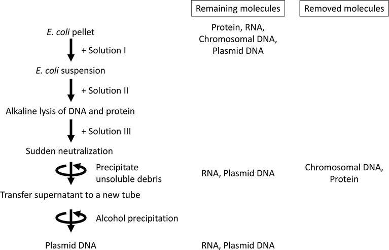 Plasmid Purification   IntechOpen