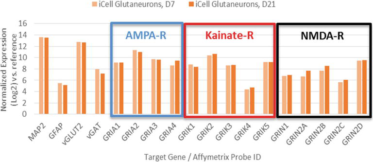 Induced Pluripotent Stem Cell-Derived Human Glutamatergic